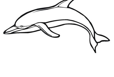 A dolphin is a mammal Worksheet - Twisty Noodle ...
