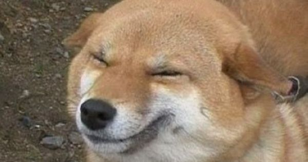 Standard Smiling Face Smiling Dogs Dogs Happy Dogs