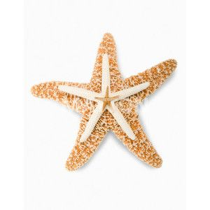 Stack Of Assorted Starfish Against White Background Close Up Royalty Free Stock Photography Matton Images Formato Png