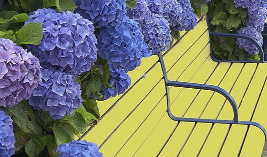 Beautiful Hydrangeas and a yellow bench... a cheerful color combination!