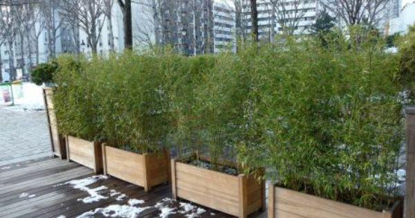 jardini re de bambous cl ture de s paration pinterest bambou jardini res et terrasses. Black Bedroom Furniture Sets. Home Design Ideas