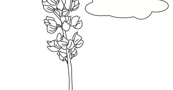 lupe daisy coloring pages - photo#11