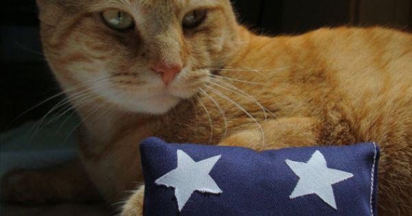 memorial day cat pictures
