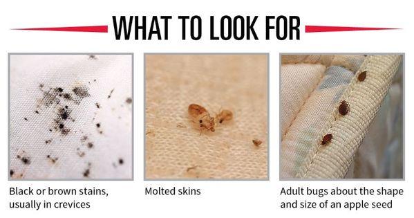 bed bugs bites google search bedbug prevention pinterest bed bugs bed bugs bites and. Black Bedroom Furniture Sets. Home Design Ideas