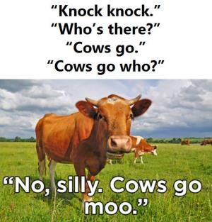 Here Is A Little Bovine Humor For Your Funday Friday For More Help Elevating Your Mood Please Contact Cornersto Knock Knock Jokes Animal Jokes Friday Jokes