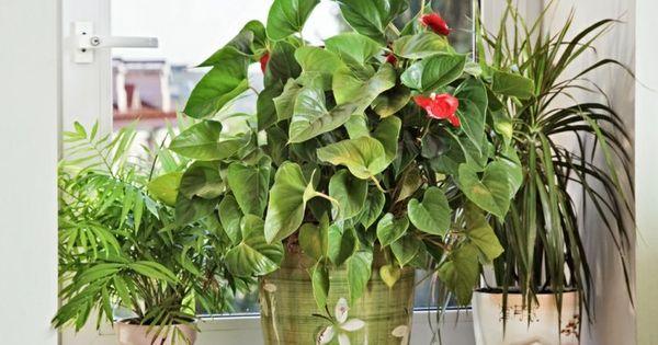Plantes d int rieur fleurs n cessitant peu de lumi re design et interieur - Plante d interieur design ...