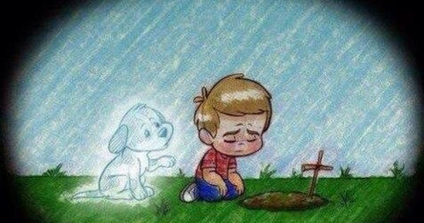 It S Been One Year My Sweet Girl I Still Love Miss You So Much I Will Forever Hold You Gently In My H Histoires De Chiens Animaux Insolites Chien Mignon