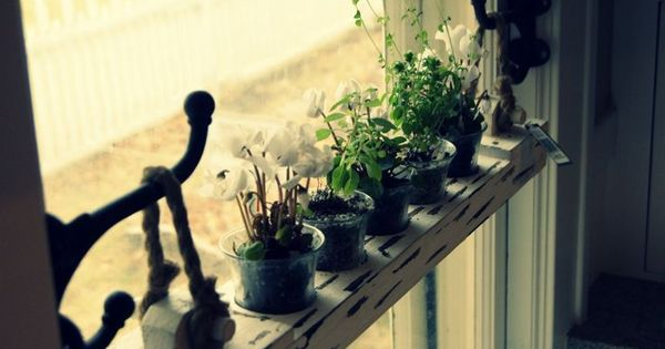 Easily Removable Hanging Window Shelf Love This Hang