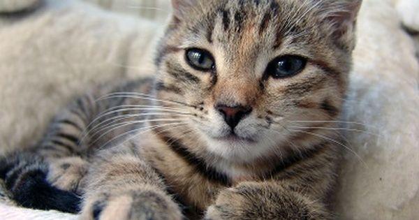 Cat Ear Mites Best Pet Home Remedies Cute Cat Quotes Cat Quotes Cats