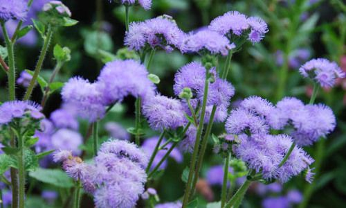 Zone 3 Flowers And Plants Plants Annual Plants Colorful Garden