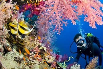 The Best Volunteer Opportunities For Divers Worldwide Places In Egypt Tourist Places Visit Egypt
