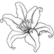 Top 35 Free Printable Spring Coloring Pages Online Flower Coloring Pages Flower Drawing Printable Flower Coloring Pages