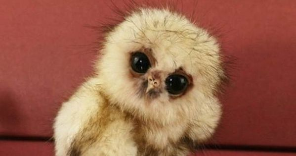 little baby owl baby baby baby :) I love you little owl