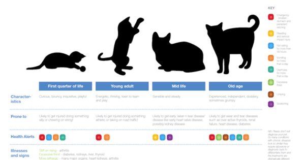 Google Image Result for http://www.petplan.co.uk/assets/images ...