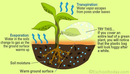 Transpiration And Evapotranspiration Water Cycle Evaporation Cycle