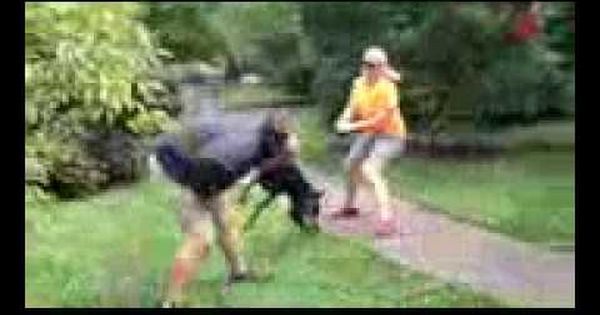 Belgian Malinois Vs Doberman Pinscher Extrem Trained Attack Guard Dogs Guard Dogs Doberman Pinscher Belgian Malinois