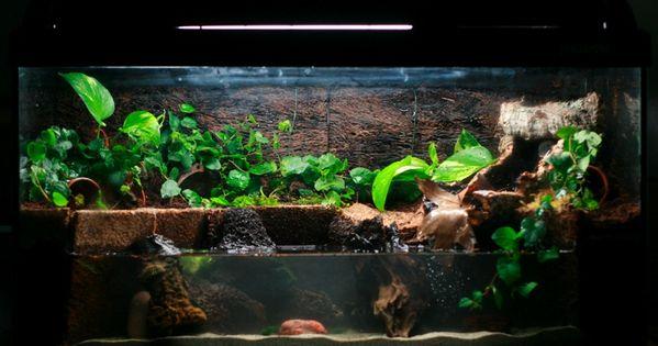 I Love This Style Of Tabk Animal Tanks Pinterest Frogs Turtle And Vivarium