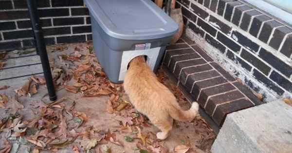 Learn How To Make The Cheapest And Easiest Cat Shelter For Winter Photos Feral Cats Feral Cat House Cat Shelters For Winter