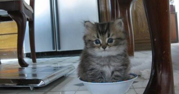 Kitten Sitting In Food Bowl Baby Cats Puppies And Kitties