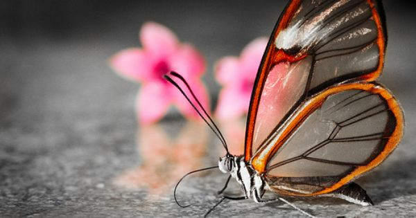 Daily Inspiration 539 Beautiful Butterfly Pictures Most Beautiful Butterfly Glasswing Butterfly