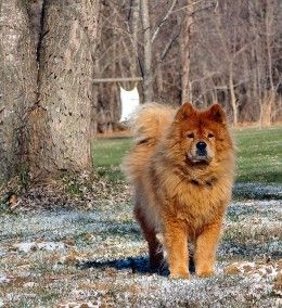 How To Train A Dog To Guard Your House Dog Teeth Dogs Best