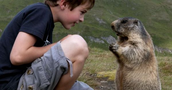 'Eight-years-old boy Mateo Welch, built a tremendous relationship with the mountain groundhogs,