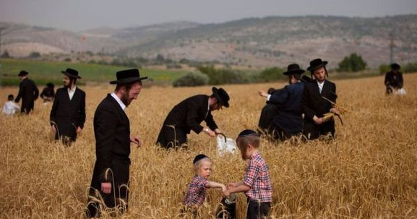 jewish holiday shavuot 2013