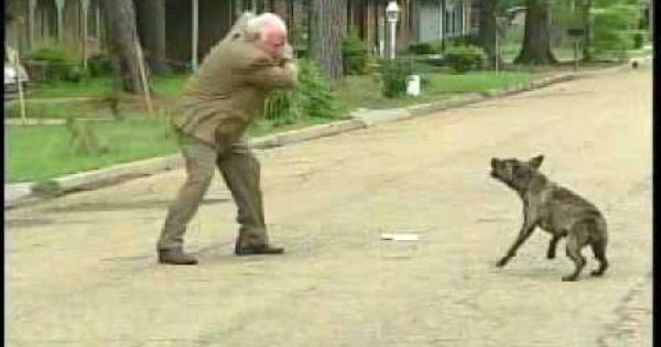 Bert Case Dog Attack Wlbt Archive Dog Daycare Near Me Dog