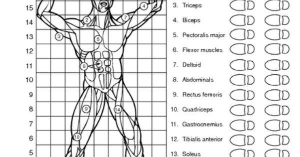 Muscular System Worksheet Science Pinterest Muscular