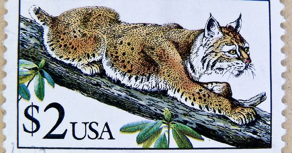 Beautiful Stamp Usa 2 00 Two Dollar Postage Lynx Timbre