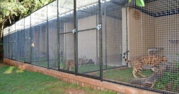 Bengal Cattery Pretoria Gauteng Cattery Bird Aviary Indoor Dog Kennel