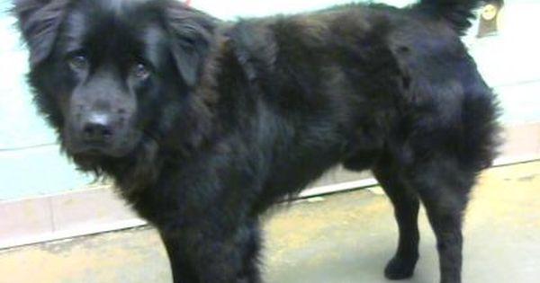 Xavier Urgent Dekalb County Animal Shelter In Decatur Georgia