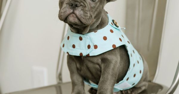 This little polka dot vest is *almost* as cute as this adorable