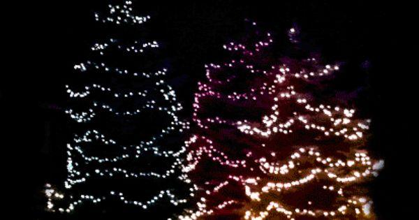 Dancing Trees Photo By Integritystaffing1 Photobucket Christmas Lights Xmas Gif Christmas Light Displays