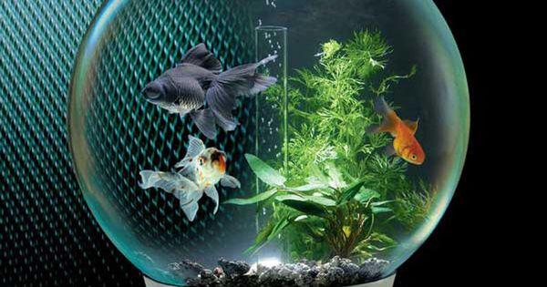 Small fish tank maintenance volume fish tank volume for Fish tank volume calculator
