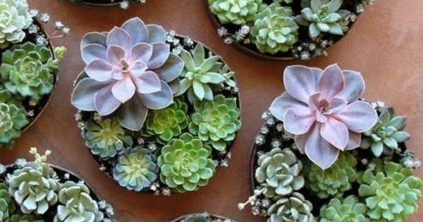 Plantes Succulentes Id Es D 39 Arrangement Meilleures Id Es Ilot Comme Des Et Plantes