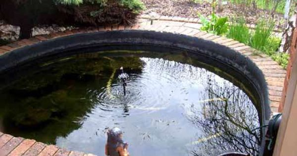 Pond Water Fountain Coating And Repair Products Fountains Ponds Diy Pond Pond
