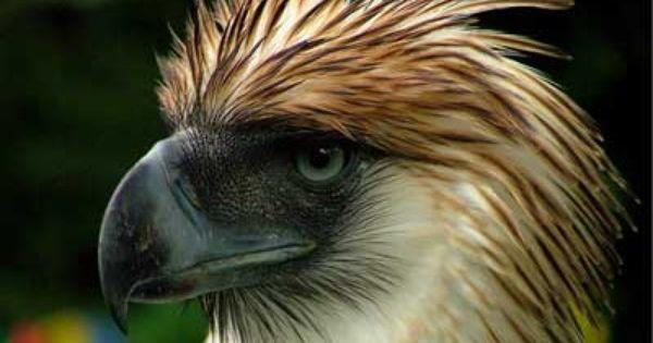 Endangered Species In The Rainforest Jpg Rainforest Animals