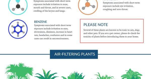 The nasa clean air study list of air filtering plants for Nasa indoor plant list