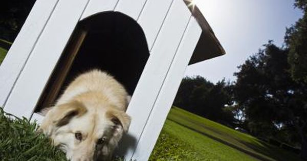 Keep Dogs Warm In The Winter Outside Dogs Warm Dog House Cool