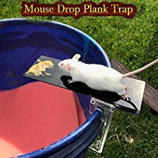 The Best Ways Get Rid Of Mice In Your House And Garage Getting Rid Of Mice Mouse Traps Getting Rid Of Rats