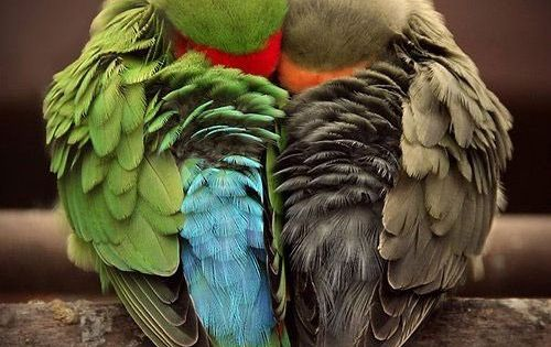 Cute parrots photo | Cute Animals Photos adorable_animals adorable_animals_photos animals_photos animals_pics cute_animals