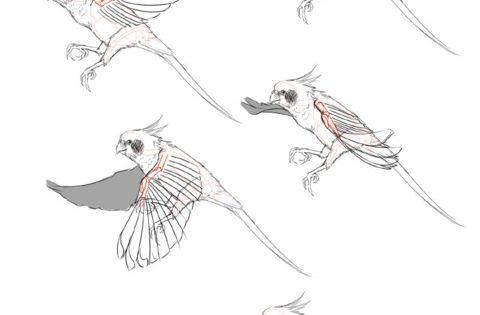 Dessiner un oiseau en vol animation pinterest ailes d 39 oiseaux ailes et oiseaux - Dessiner un oiseau ...