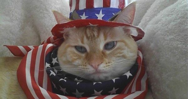 Image result for happy 4th of July cat