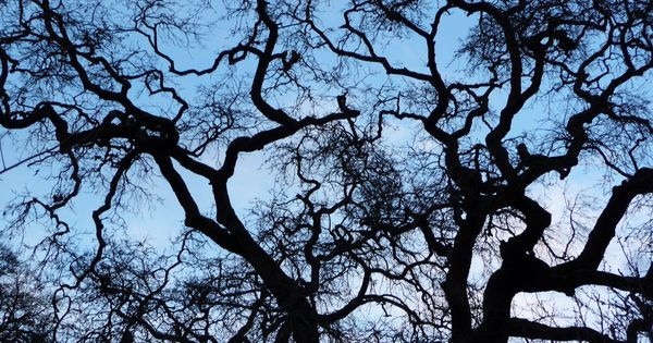 ace parking 2020 live oak