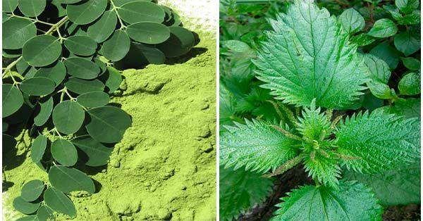 Hierbas Medicinales que rejuvenecen el cuerpo entero | Hierba medicinal,  Hierbas, Rejuvenecer