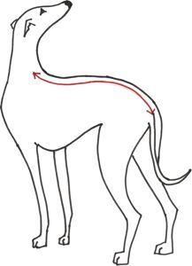 Greyhound Coat Pattern : greyhound, pattern, WHIPPET, PATTERNS, Pattern,, Jacket, Patterns,, Coats
