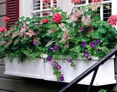 Spectacular Container Gardens: Geraniums, Caladiums & Petunias < Spectacular Container Gardening Ideas