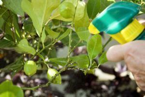 10 Remedios Contra Plagas Hongos Y Plantas Desnutridas Insecticida Natural Para Plantas Plagas En Las Plantas Insecticidas Naturales