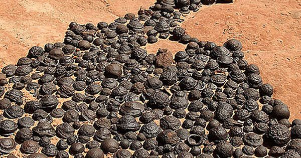 Moqui Marbles, naturally occurring iron oxide concretions that arise from Navajo sandstone.